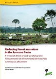 Reducing forest emissions in the Amazon Basin: a review of drivers of land-use change and how payments for environmental services (PES) schemes can affect them