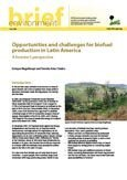 Opportunities and challenges for biofuel production in Latin America: a forester's perspective