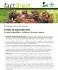 For�ts et biocarburants: ce que les décideurs politiques devraient savoir