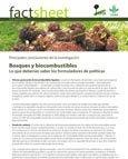 Bosques y biocombustibles: lo que deberían saber los formuladores de políticas