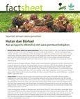Hutan dan Biofuel: apa yang perlu diketahui oleh para pembuat kebijakan
