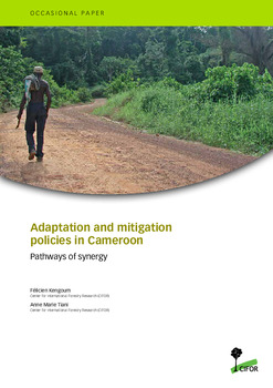 Adaptation and mitigation policies in Cameroon: pathways of synergy