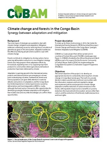 Climate change and forests in the Congo Basin: Synergy between adaptation and mitigation
