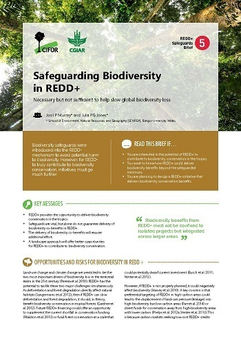 Safeguarding biodiversity in REDD+: Necessary but not sufficient to help slow global biodiversity loss