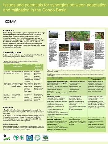 Issues and potentials for synergies between adaptation and mitigation in the Congo Basin
