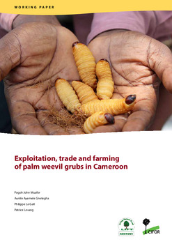 Exploitation, trade and farming of palm weevil grubs in Cameroon