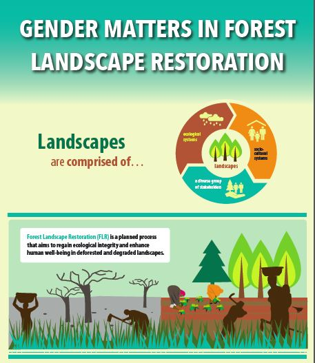 Gender matters in Forest Landscape Restoration