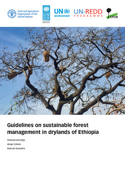 Guidelines on sustainable forest management in drylands of Ethiopia