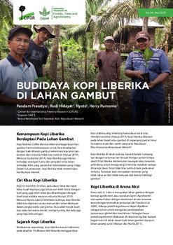 Budidaya kopi Liberika di lahan gambut