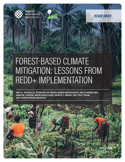 Forest-based climate mitigation: Lessons from REDD+ implementation
