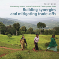 Harnessing forests for the Sustainable Development Goals: Building synergies and mitigating trade-offs