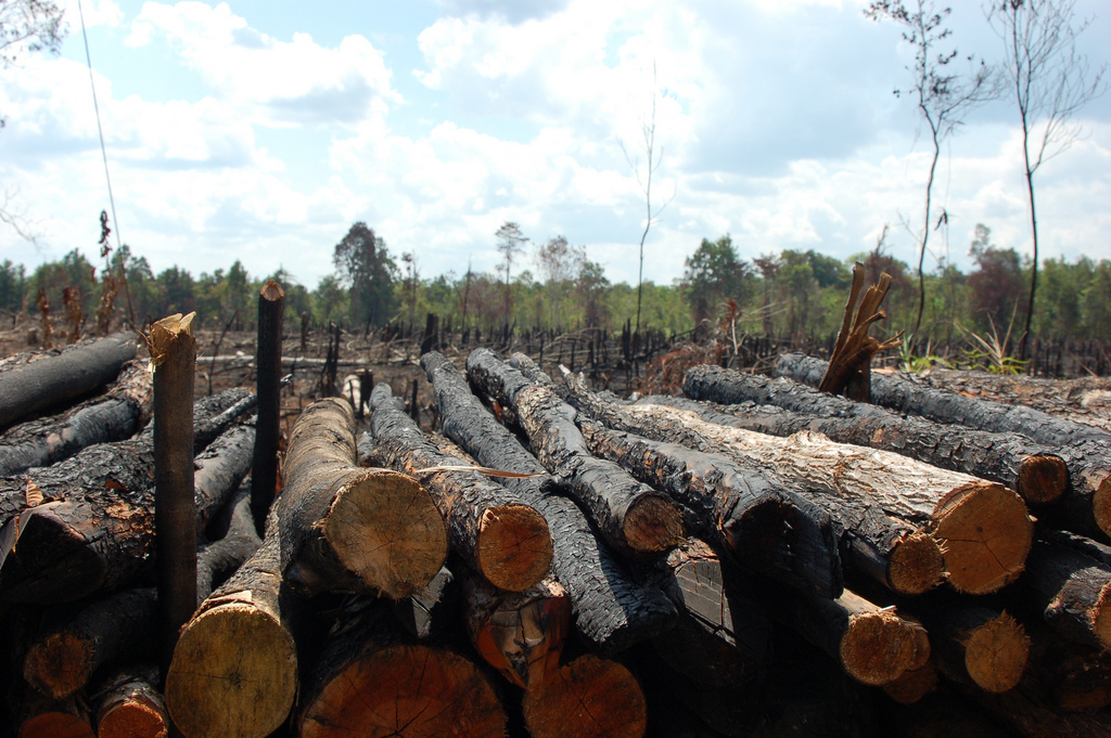 Illegal logging continues to thrive worldwide and proliferate in domestic markets