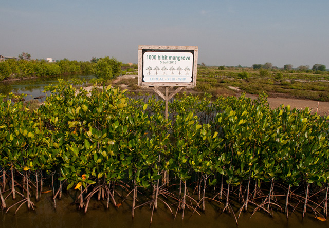 Study shows that involving communities in mangrove management makes them more sustainable
