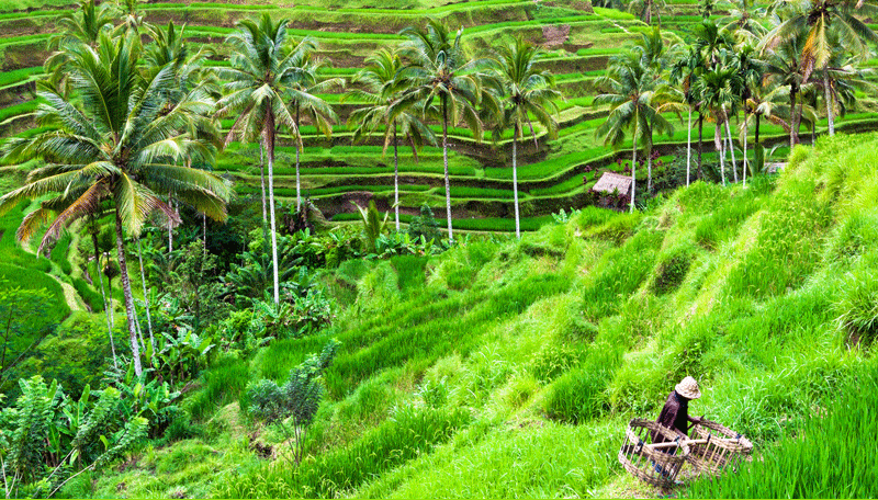 CIFOR scientists to talk tenure, governance and more at Land and Poverty Conference
