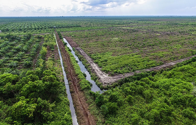 New research: More peat in the tropics than previously thought, with implications for climate action