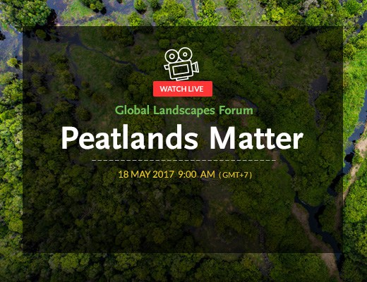 Global Landscapes Forum sobre turberas: videos disponibles
