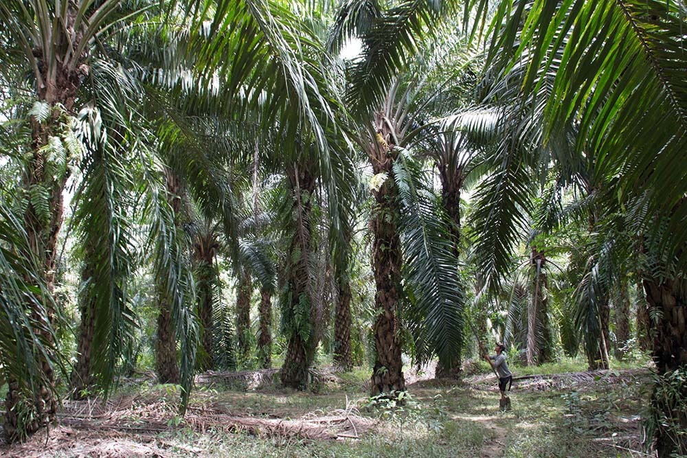 "Publication: ""Current practices and innovations in smallholder palm oil finance in Indonesia and Malaysia"""