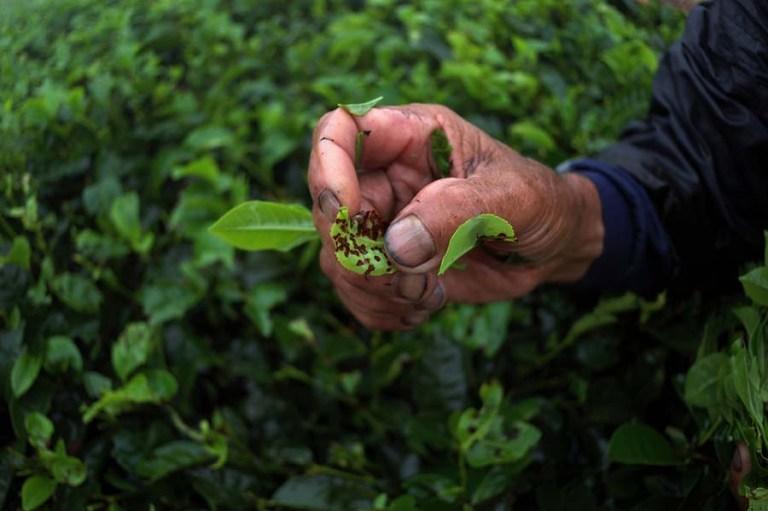Exploring agrarian livelihoods in Tanzania