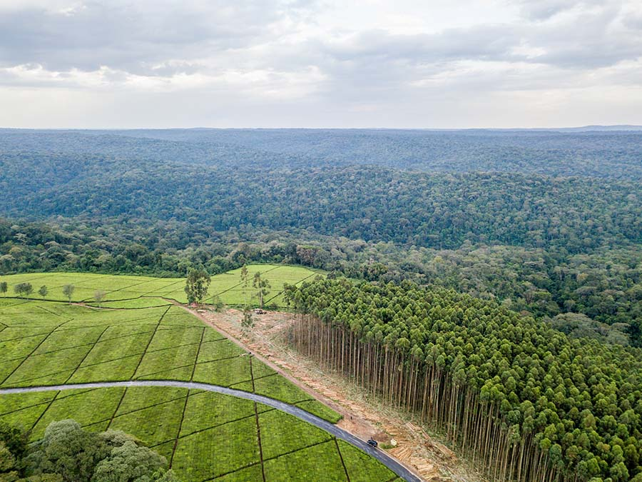 International Conference Working across Sectors to Halt Deforestation and Increase Forest Area – from Aspiration to Action