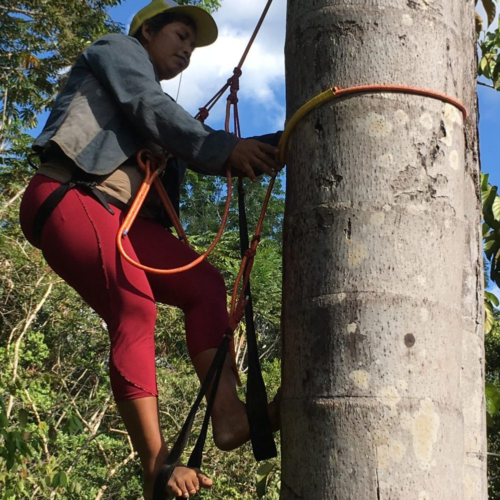 """Taller: """"Avances y desafíos para el manejo sostenible de las turberas de aguajales en la Amazonía"""""""