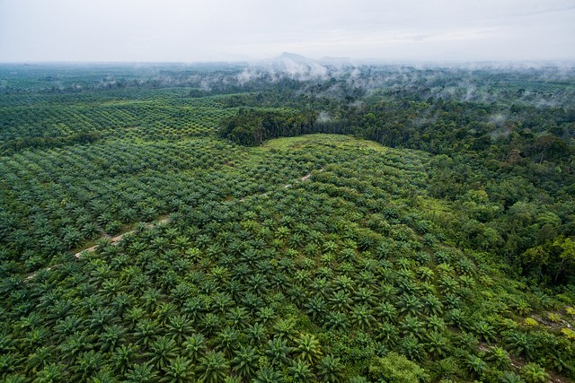 Balancing oil palm economic development and conservation: Publication