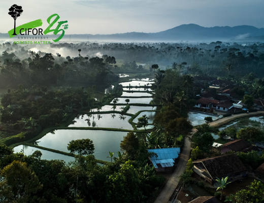 CIFOR 25th Anniversary: Forests and water